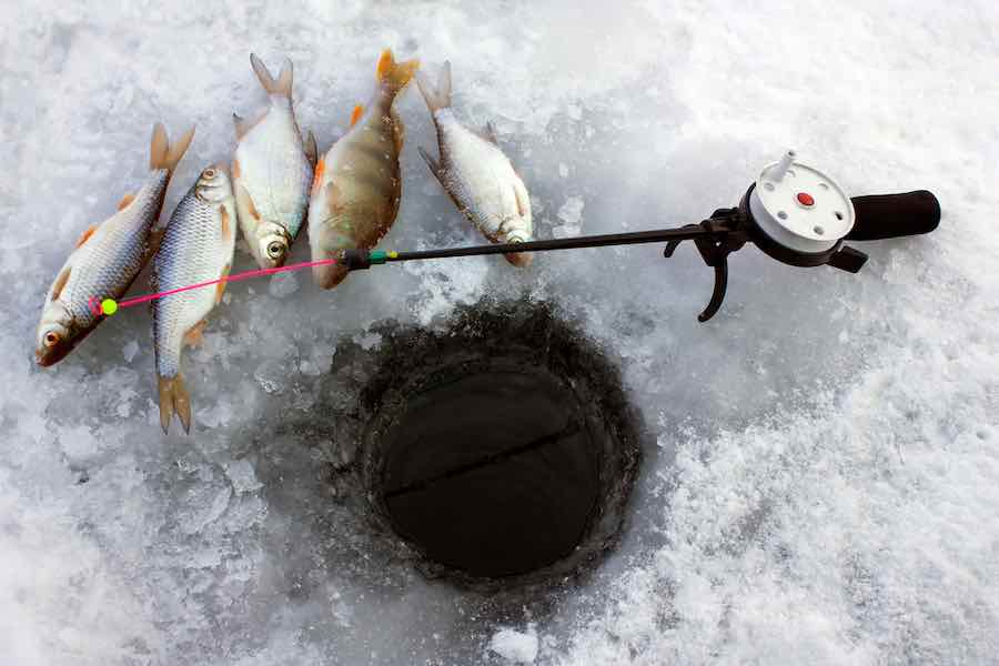 Fish Caught Ice Fishing